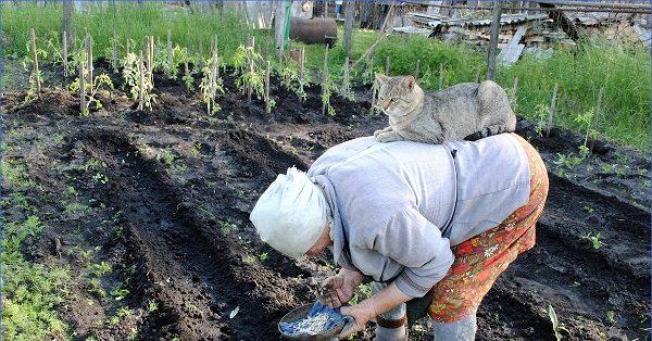 Бабушка с кошкой на спине