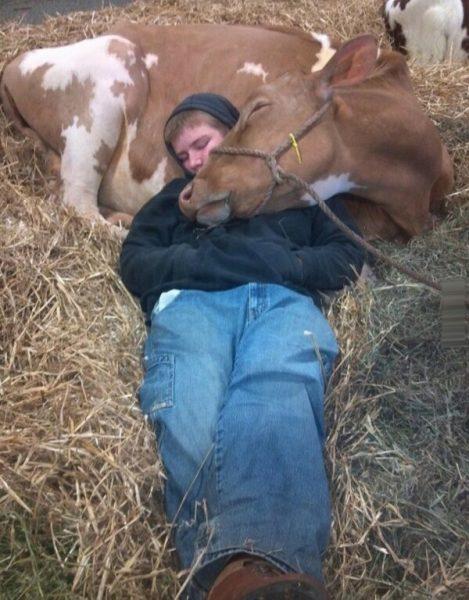 Мужчина с коровой