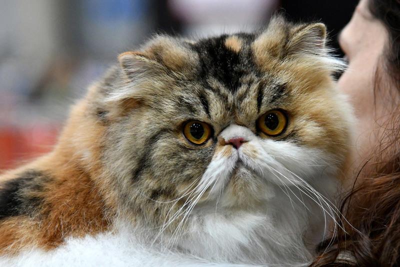 Ваши привычки, которые не нравятся кошкам