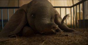 слоненок в цирке