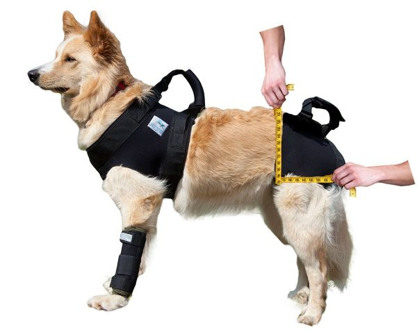 Бандажная шлейка на собаке