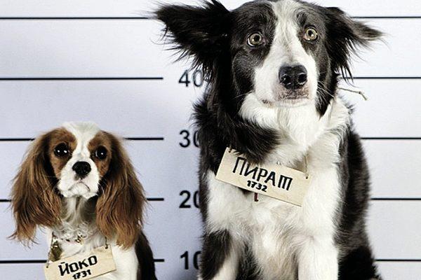Собака Айса рядом со своей коллегой по съёмкам