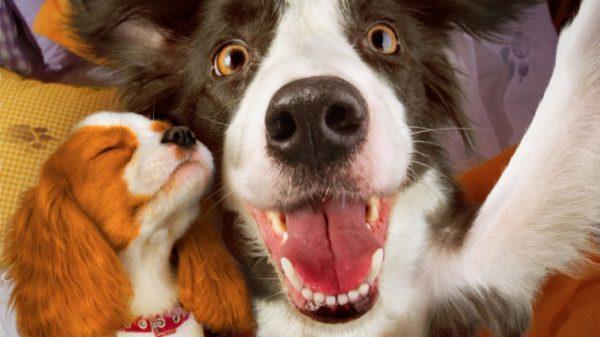Собака Фэмми со своей коллегой по съёмкам