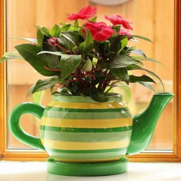 Цветок в заварном чайнике