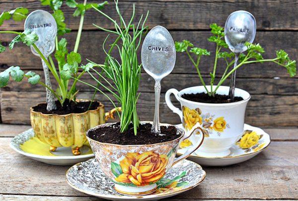 Растения в красивых чашечках