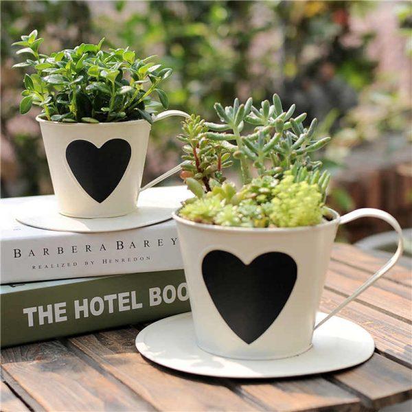 Простые растения в чашечках