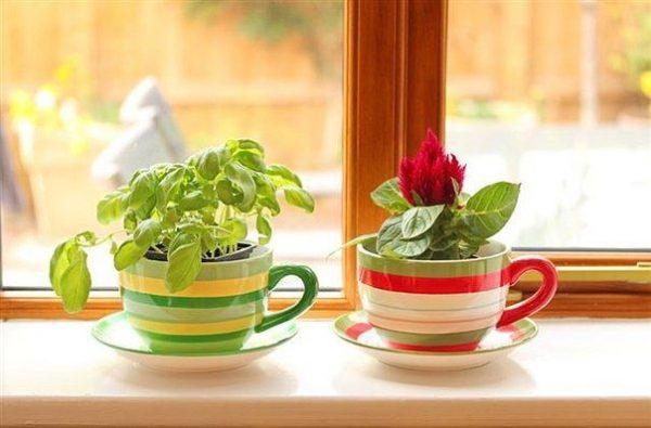Чашечки в качестве горшочка для растений