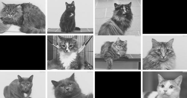 66 животных отравились в оренбурге