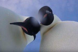 селфи с пингвином