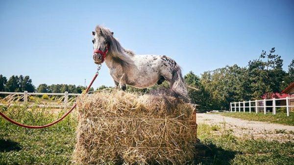 маленький конь Бомбель