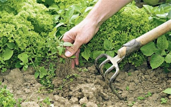 Рыхление почвы в огороде
