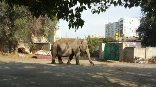Слон разгуливал по улицам Харькова
