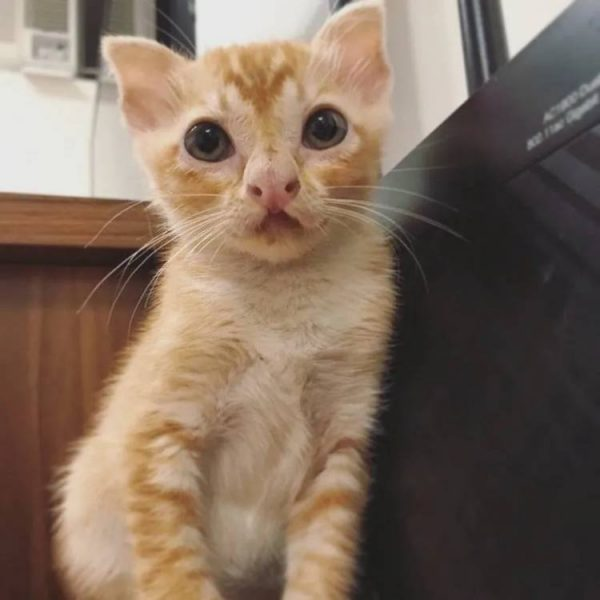 необычная внешность у котёнка