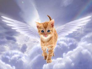 Похороны важного кота посетили сотни кошек, собак и даже ослик
