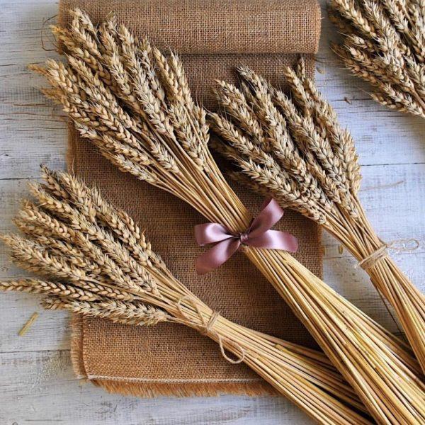 Связанные колосья пшеницы