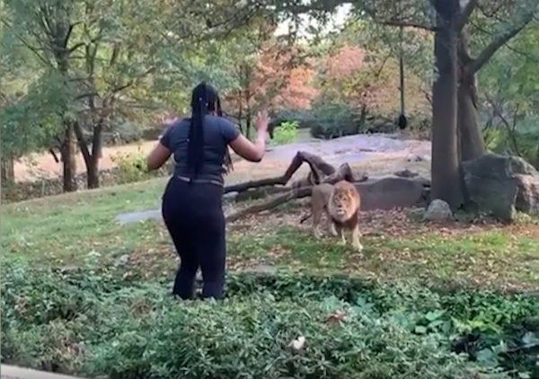 девушка танцует для льва