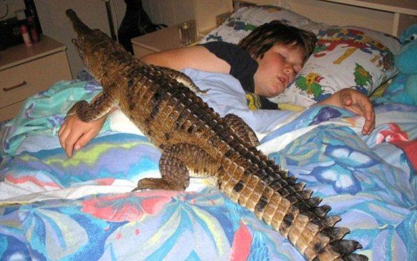 крокодил в кровати
