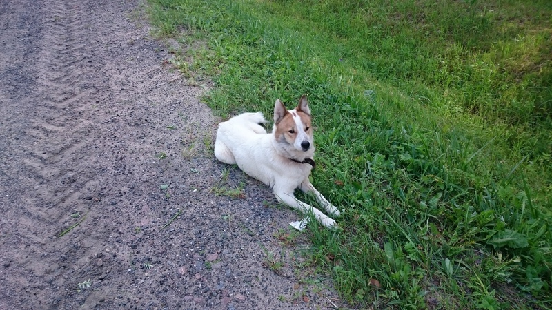 собака у трассы