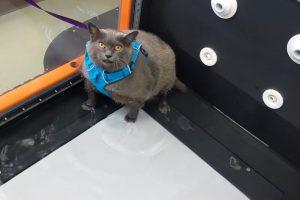 кошка по кличке шлакоблок