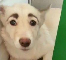 собака с бровями Фрида