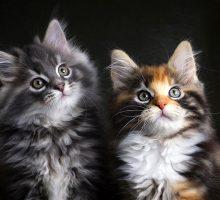 2 кошки