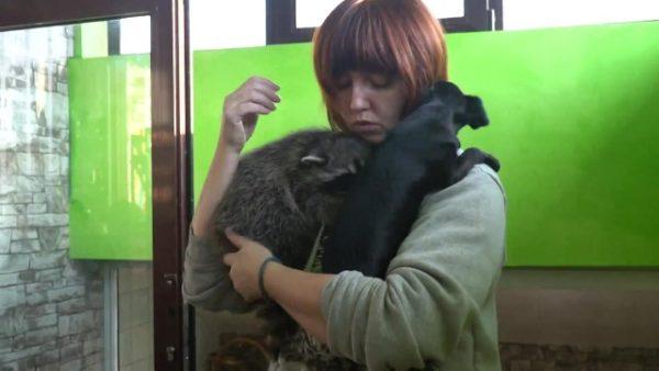 Енот, щенок и волонтёр