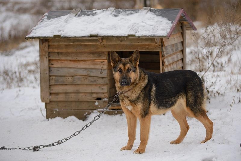 Собака на даче зимой